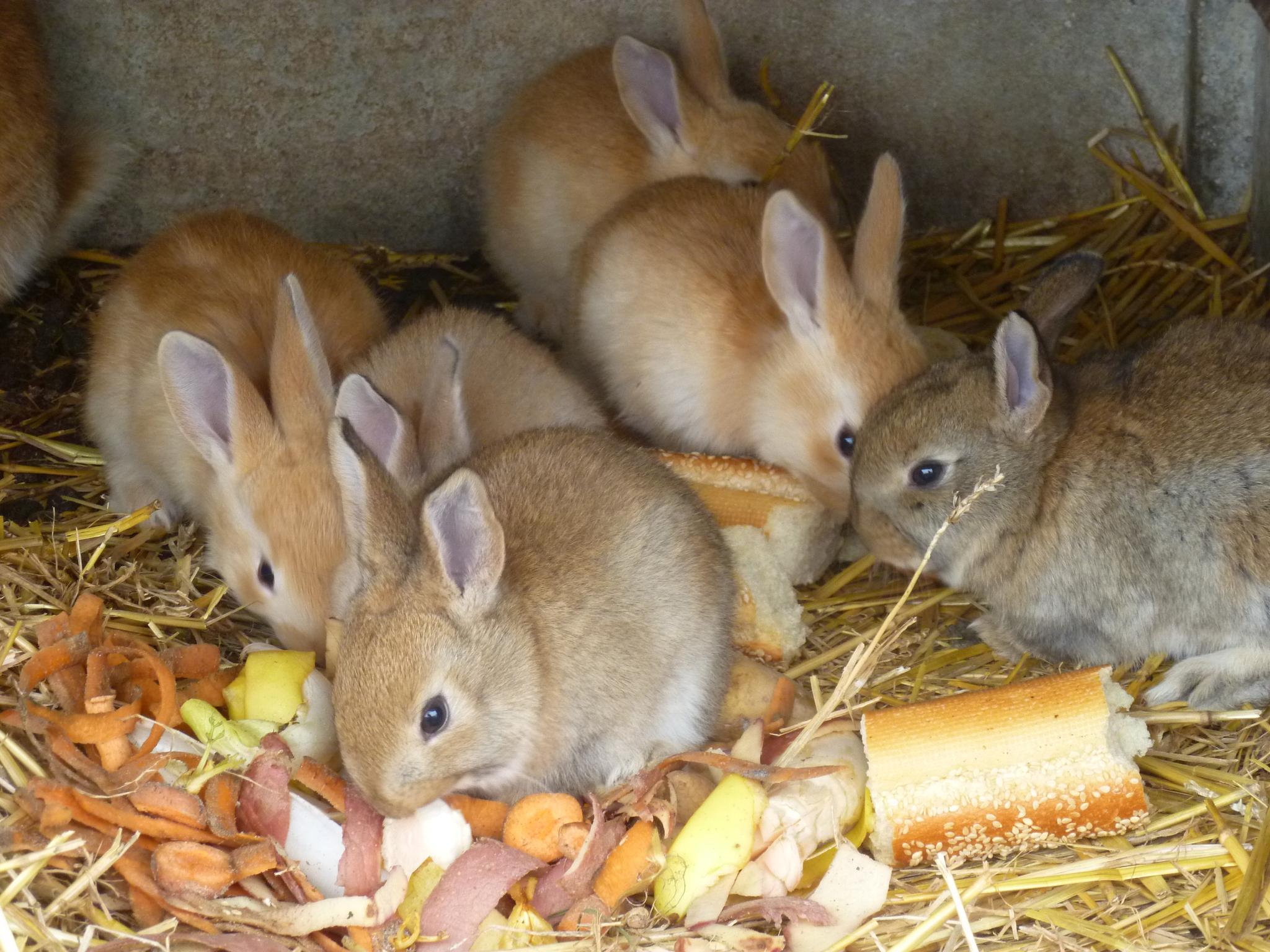 nourriture-lapin