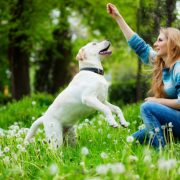 occuper-son-chien