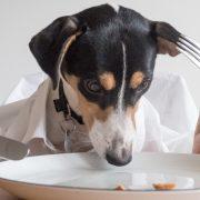 nourrir un chien sans croquettes